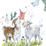 729-goats-washing-line