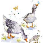 733-geese-gosling