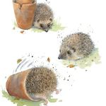 742-hedgehogs-2