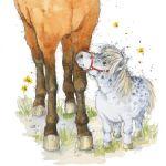 744-little-horse-legs