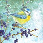 865-blue-tit-berries-1