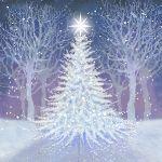 862-white-trees